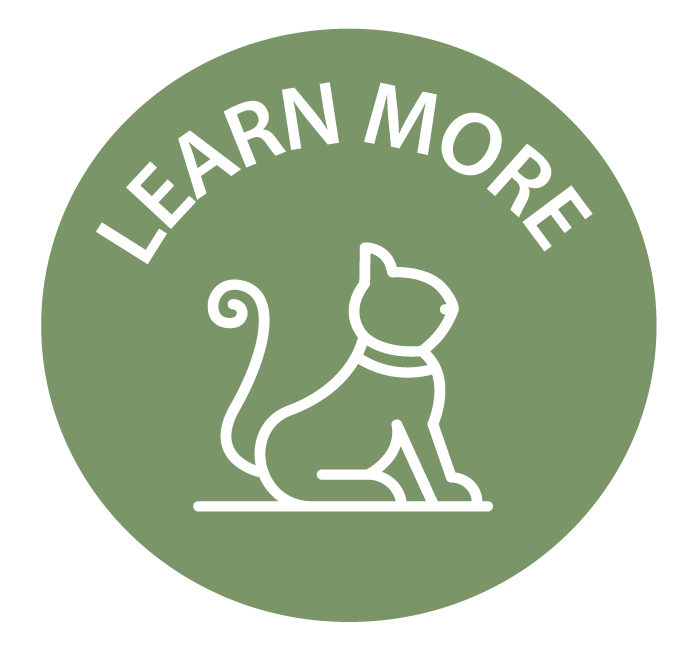 Learn-more-icon.png